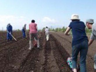 菜の花畑の種まき作業